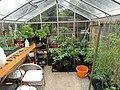 -2020-07-11 Greenhouse interior, Trimingham, Norfolk.JPG