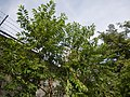 0158jfMalolos Historic Town Center Heritage Bulacanfvf 08.jpg