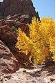 015 - Along Burr Trail (10-14-11) -03 (6273112856).jpg