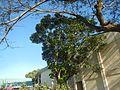 09599jfAlexis G. Santos National High School Liciada, Bustos Bulacanfvf 26.jpg