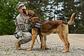 131st Military Working Dog Detachment device detection training 130611-A-BS310-140.jpg