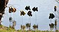14-04-16 Zülpich Fische 01.jpg