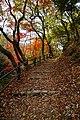 171125 Kobe Municipal Forest Botanical Garden10s3.jpg