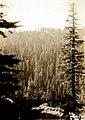 1930. Timber type looking westward across Anna Creek. Crater Lake National Park. (40047838121).jpg