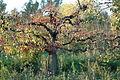 2007-10-20 (25) Tree, Baum.JPG