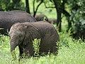 20090507-TZ-NGO Safari 360 (4677437191).jpg