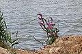 2015.09.05 13.50.50 IMG 0396 - Flickr - andrey zharkikh.jpg