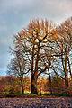 20151213 Burlo-Vardingholter Venn, Borken (04201).jpg