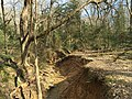 2016-03-01 14 20 34 View down a trail along a severely eroded tributary of Little Difficult Run within Fred Crabtree Park in Reston, Fairfax County, Virginia.jpg