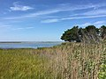 2017-09-04 12 16 12 View west-northwest across marshes along the shore of Barnegat Bay from the sand road to Barnegat Inlet within the Southern Natural Area of Island Beach State Park, in Berkeley Township, Ocean County, New Jersey.jpg