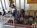 20200213 140144 Mandalay King Galon Gold Leaf Workshop anagoria.jpg