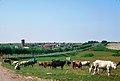24 - Herd along Minsk - Smolensk Highway.jpg