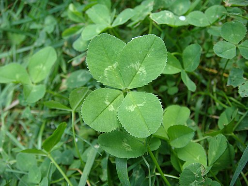 4-leaf clover (original)