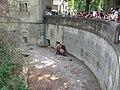 4465 - Bern - Bärengraben - Mating Ursus arctos.JPG