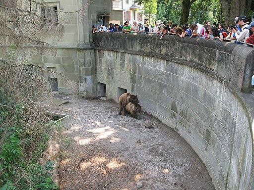4465 - Bern - Bärengraben - Mating Ursus arctos