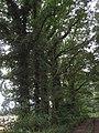 49843 Halle, Germany - panoramio - Roland Meijerink (1).jpg