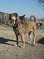 5-طبیعت روستای صومعه ملکشاه سگ سراب.jpg