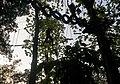 6. হাজারীখিল বন্যপ্রানী অভয়ারন্য ও ট্রি এক্টিভিটি.jpg