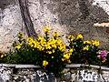 A@a colors palehori village cyprus - panoramio (1).jpg