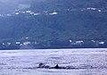 Açores 2010-07-21 (5118421756).jpg