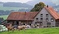 AR Halden Bauernhaus cows.jpg