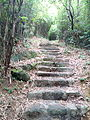A path leading to Pinewood battery.jpg