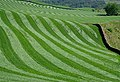 A rolled field at Douglen Brae - geograph.org.uk - 806774.jpg