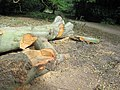 A use for the fallen tree - a seat for passers-by - geograph.org.uk - 1505001.jpg