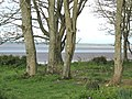 A view through the trees - geograph.org.uk - 1922531.jpg