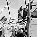 Aankomst van de paarden voor de koninklijke calèche in de haven van Willemstad, Bestanddeelnr 252-2726.jpg