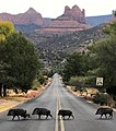 Abbey Road, Sedona Style - Javelinas Crossing Road in Sedona, Arizona.jpg
