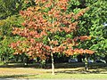 Abington Park, Northampton - panoramio (1).jpg