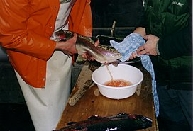 Ikan Koi Loncat