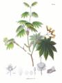 Acer japonicum SZ144.png