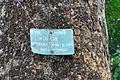 Acharya Jagadish Chandra Bose Indian Botanic Garden - Howrah 2011-01-08 9762.JPG