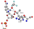 Active site ADH1.png