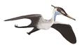 Aerodactylus MCZ 1505.png