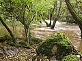 Afon-River Gwaun in spate - geograph.org.uk - 199375.jpg