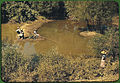 African Americans fishing in creek near cotton plantations. Belzoni, Mississippi, October 1939.jpg
