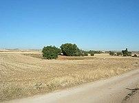 Agrupaciones de árboles - panoramio.jpg