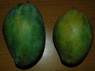 Alampur Baneshan - Alampur Beneshan stays green even on ripening - the yellowing one on the right is probably slightly over-ripe. Note the small white pores distributed all over the skin of both mangoes, which is a characteristic of this cultivar.
