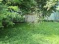 Alberello - panoramio - Gio la Gamb.jpg