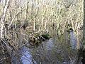 Alder swamp, Broad Fen, Dilham, Norfolk - geograph.org.uk - 315278.jpg