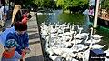 Alexandra Park. Windsor , Anglia. Rzeka Tamiza widok z nadbrzeża - panoramio.jpg