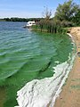 Algal bloom on Niegripper See - geo.hlipp.de - 5201.jpg
