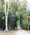 Allée au jardin du père Gillet à Kisantu.JPG