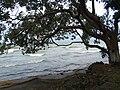 Along Lake Nicaragua - Near Santo Domingo - Ometepe Island - Nicaragua (30987289423).jpg