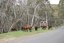 A small group of horses grazing next to a paved road