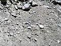Alpine glacial till (Pleistocene; Lee Vining Canyon, Yosemite National Park, California, USA) 9.jpg