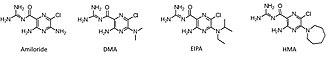 Amiloride - Amiloride and analogues 5'-(N,N-dimethyl)-amiloride (DMA), 5-N-ethyl-N-isopropyl amiloride (EIPA), and 5-(N,N-hexamethylene)-amiloride (HMA).